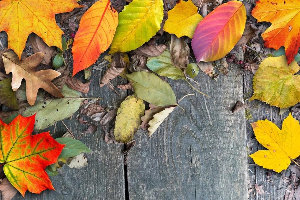 hojas-otono