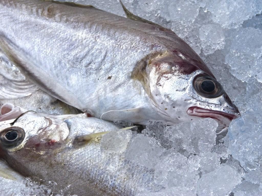 pescado-fresco