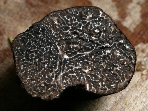 trufa-negra